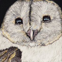 Lucy the Barnyard Owl by Sue Schreiber